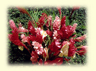 (Tropical Flowers - Ginger Lily & Anthuriums)